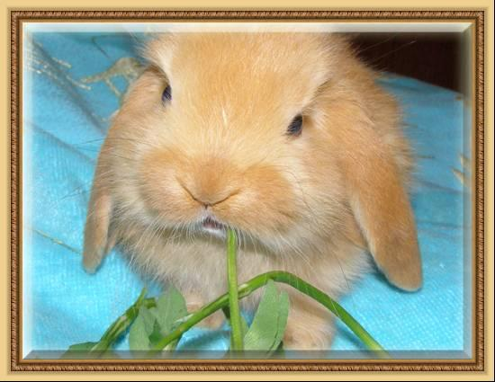 фото декоративных и карликовых кроликов