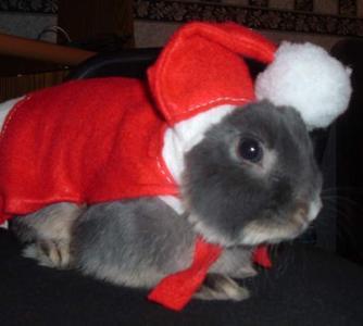 год кролика 2011