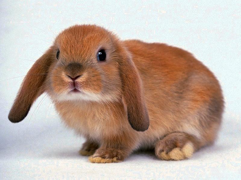 кролики и дети