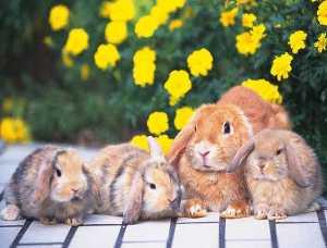 возраст кролика