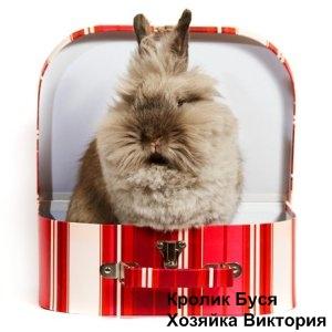 игры для кроликов