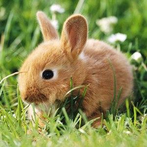 специалист по кроликам