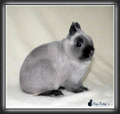 купить кролика