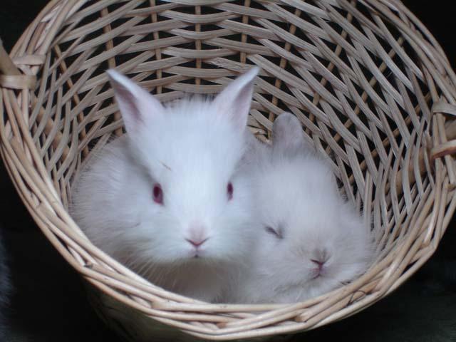 правильный уход за кролкиами