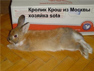 кастрация кроликов