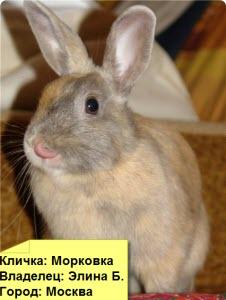 кролик грызет обои
