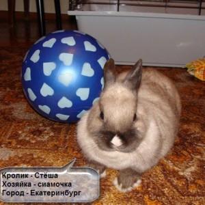 аптечка для кролика