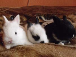 музыка для кролика