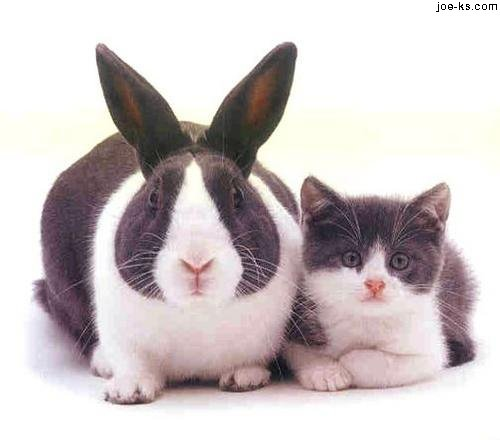 кролик и кот