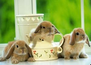 заводчики кроликов