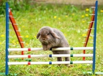 аджилити кроликов