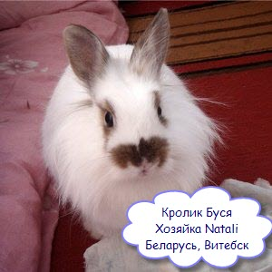 карантин для кролика