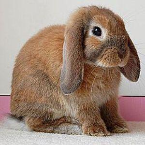 кролик воняет