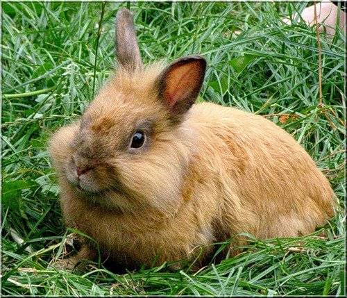 кормление кроликов
