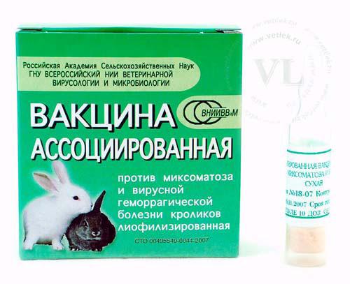 21 день после вакцинации вакцина ещё не начинает защищать вашего кролика.  Пока идёт лишь выработка иммунитета и...