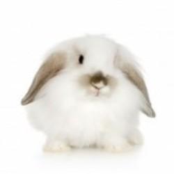 неправильный прикус у карликового кролика