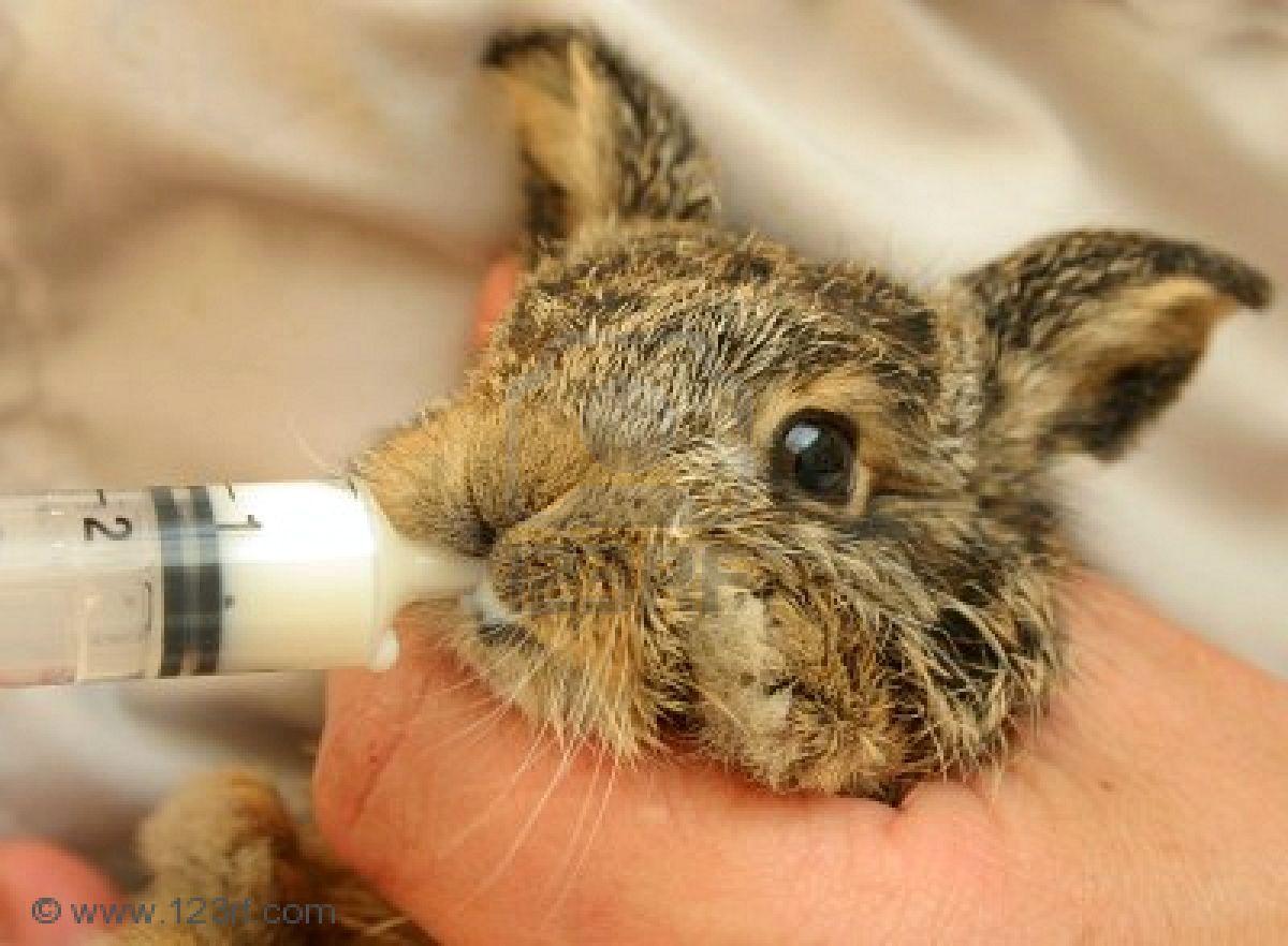 как выкормить крольчат