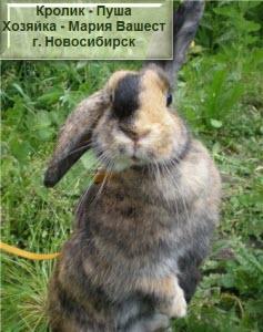 кролик надоел