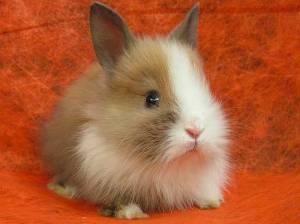 первые дни кролика