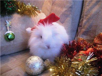 новый год 2011 кролика