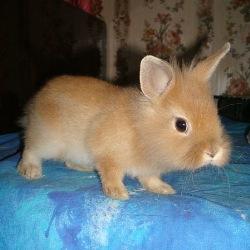 купить здорового кролика