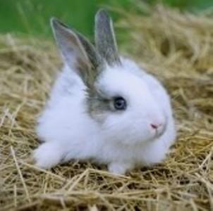 прививки кроликов