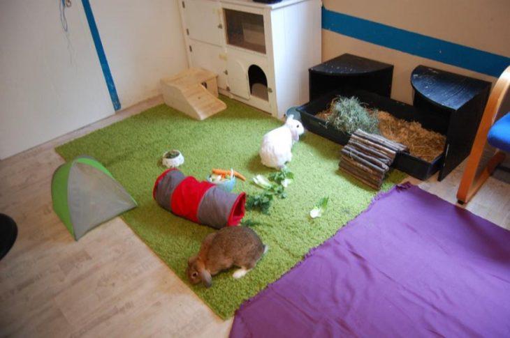 Игры для кролика
