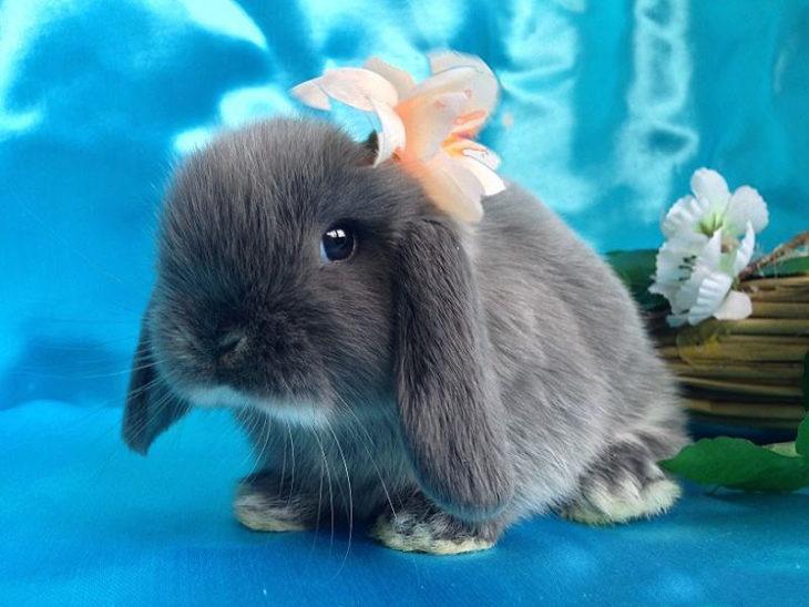 Нарядный кролик
