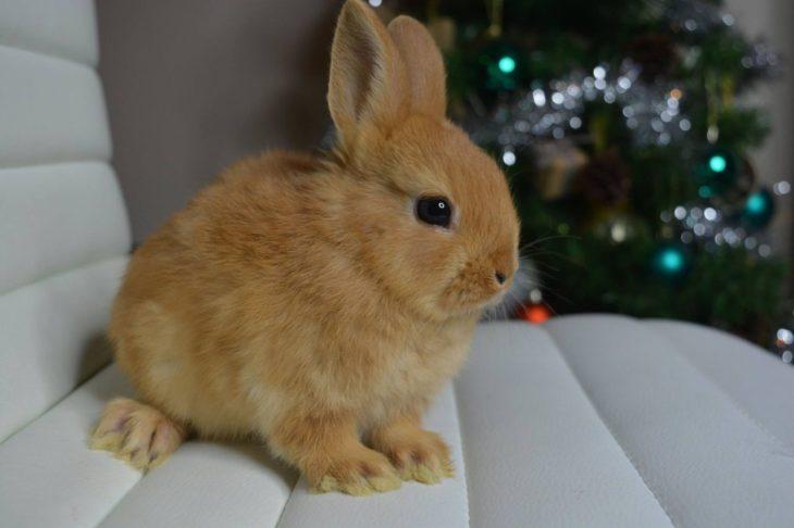 Новогодняя история кролика