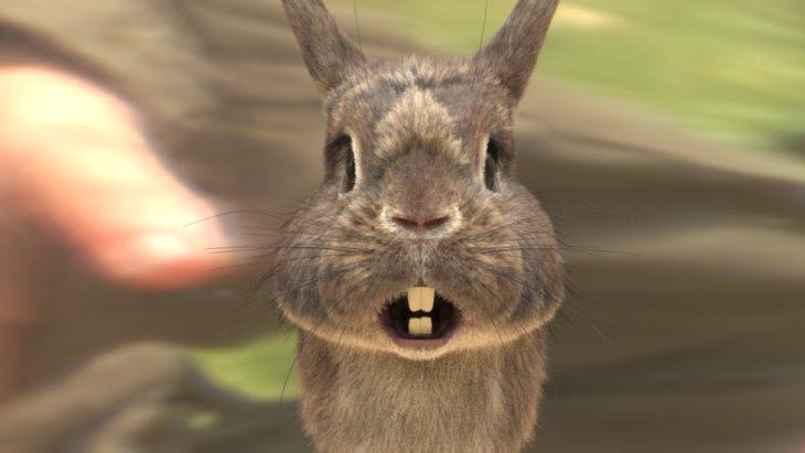 Кролик грызет одежду