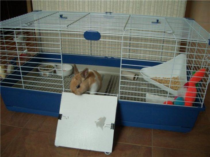 Необходимые предметы для кролика