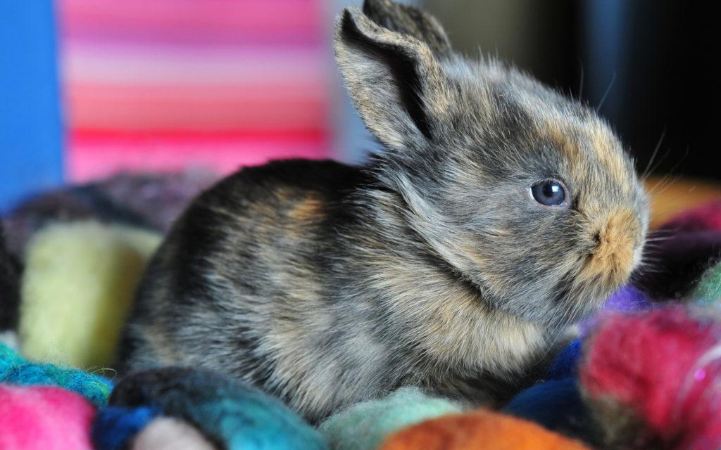Пусть кролики будут здоровы