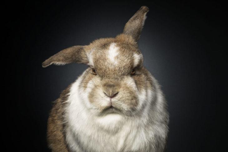 Агрессивный кролик