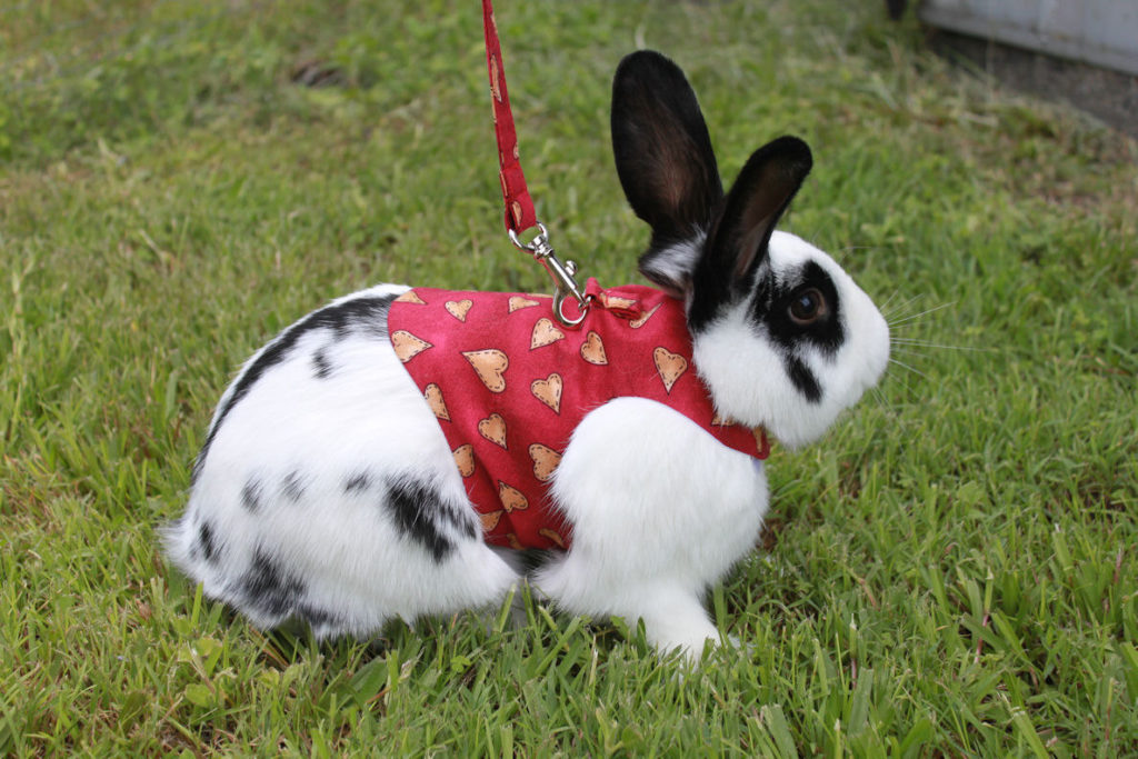 Кролик на свежем воздухе