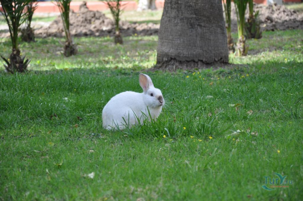 Крольчиха метит территорию