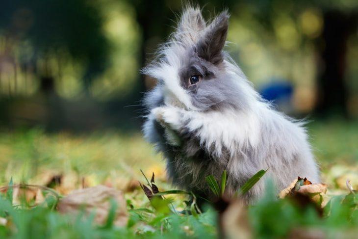 Куда деть кролика