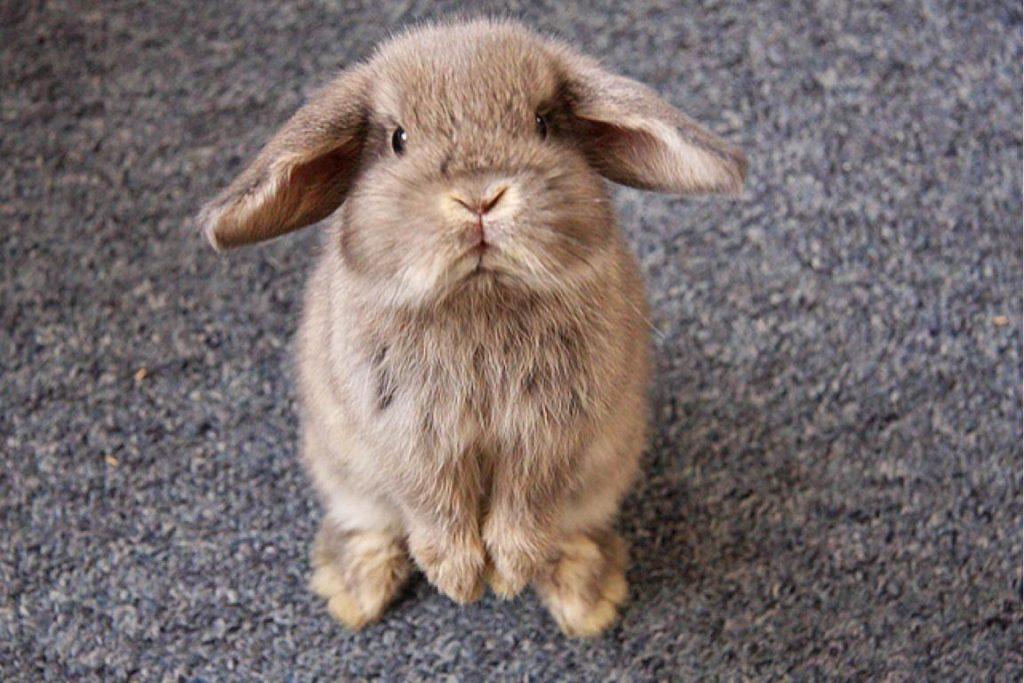 Надоел кролик