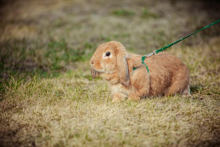 Прогулка кролика