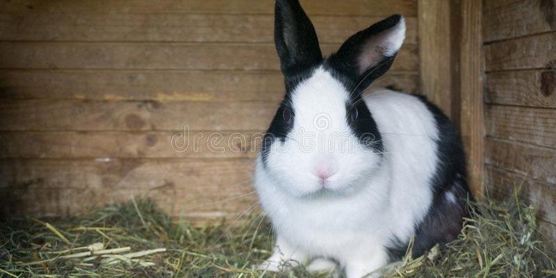 Декоративный кролик в вашем доме