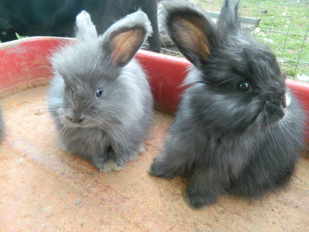 Выбираем пол кролика