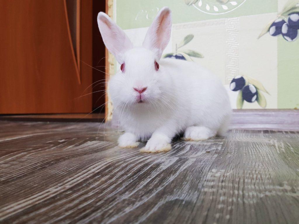 Выбираем кролика