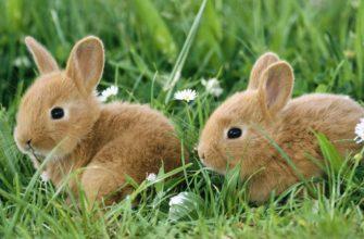 Где купить кролика