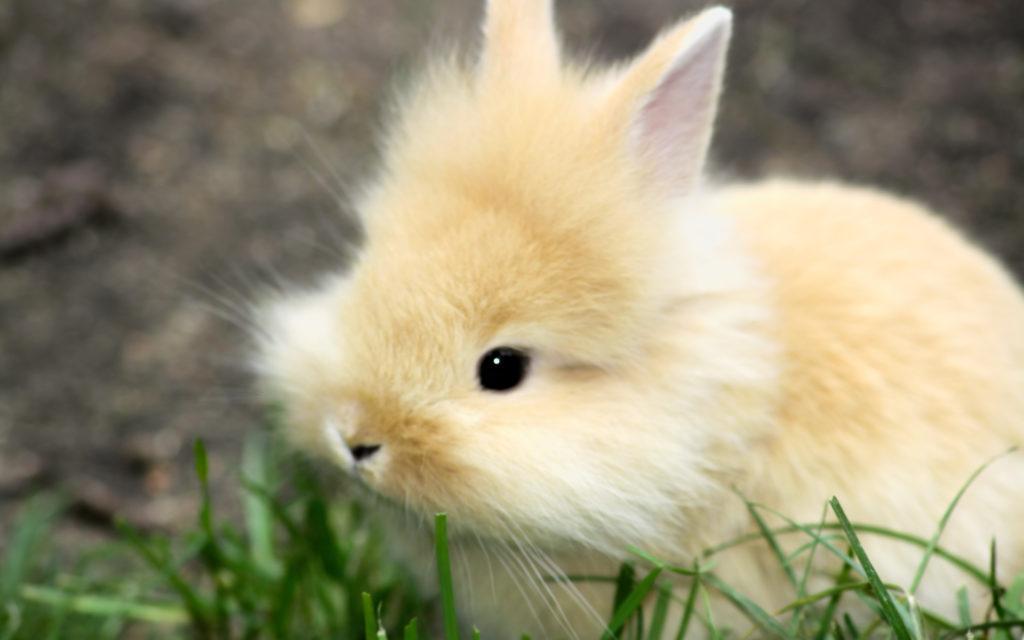 Куплю кролика