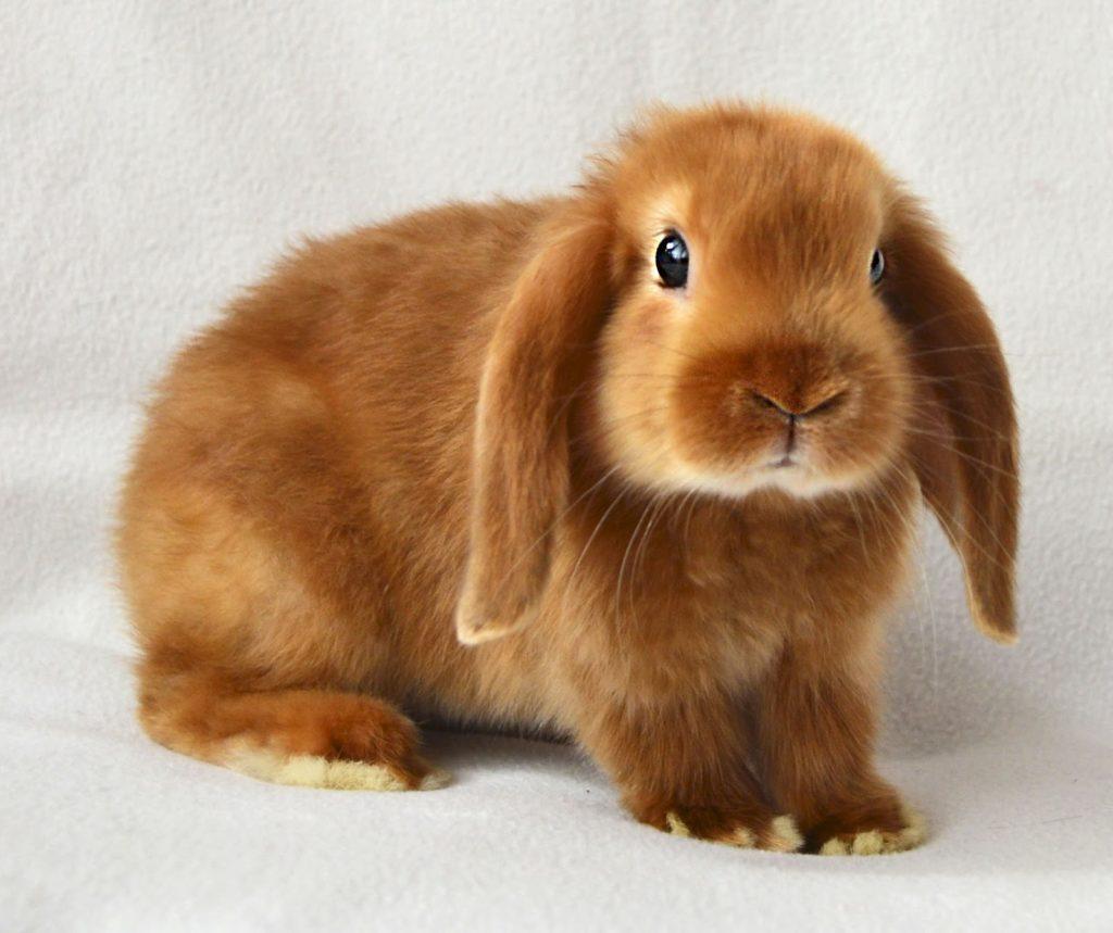 Полезные привычки кролика