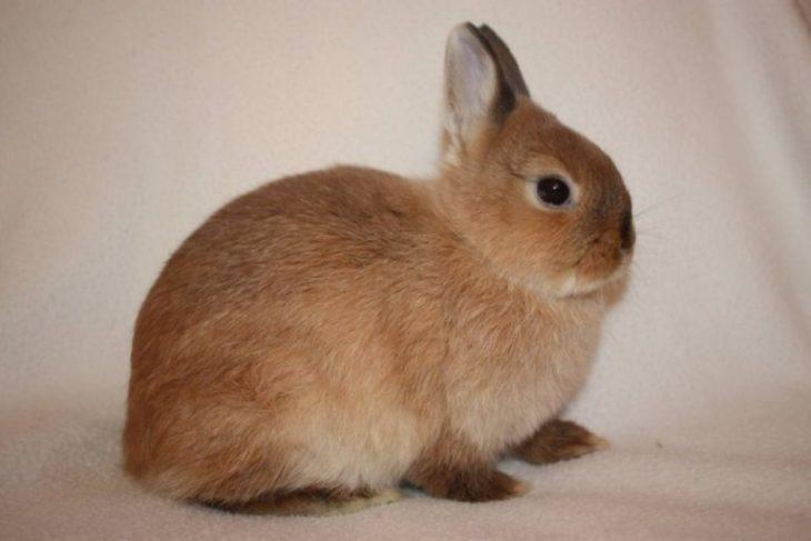 кролик получил тепловой удар