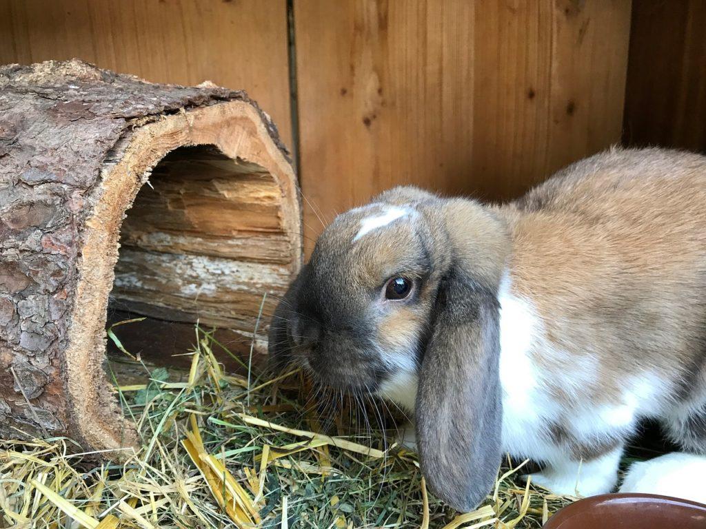 Кролики в одной клетке