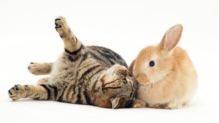 Картинки зайчиков и котов