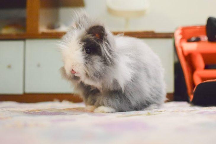 Кролик в машине
