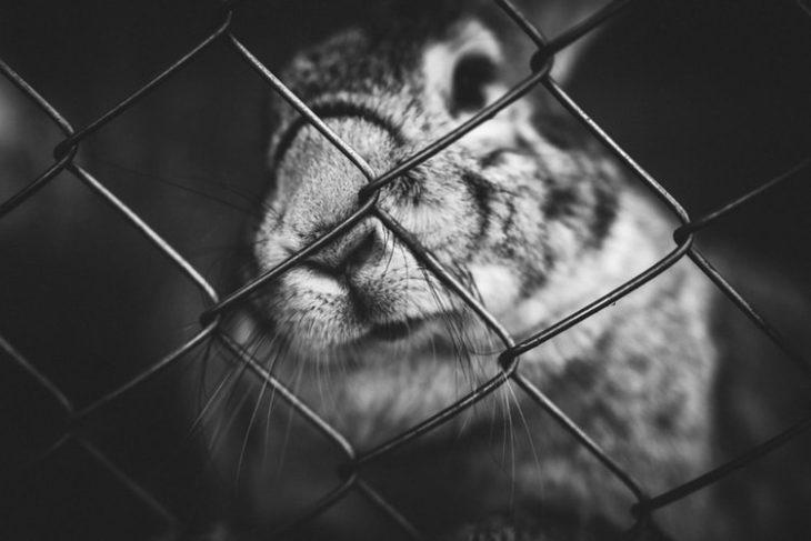 Перевозка кролика