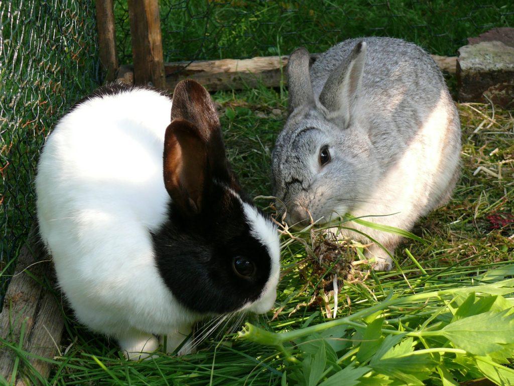 Сочные корма для кролика